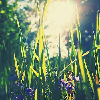 Summer Sun by Patrick Horgan