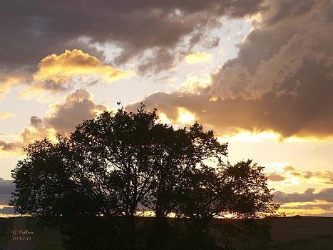 Summer Sunset by Gordon Collins