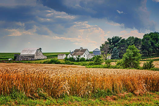Nikolyn McDonald - Summer Wheat - Nebraska Farm