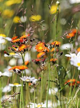 Summer Wildflowers by CJ Benson