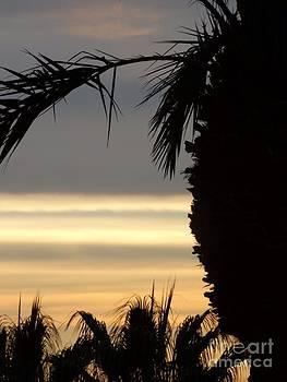 Summerlin NV sunset by Linda Xydas