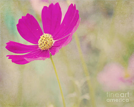 Summer's Beauty by Pam  Holdsworth