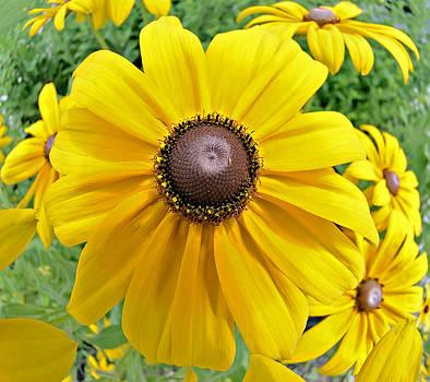 Summers Bloom by Susan Leggett