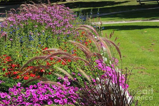 Summer's Garden by Margaret Hamilton