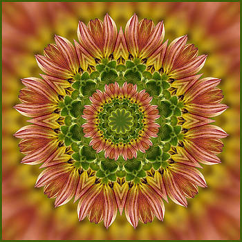 Summertime Mix Sunflower Kaleidoscope by Liz Mackney