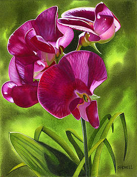Sun and the Sweet Peas by Sandi Howell