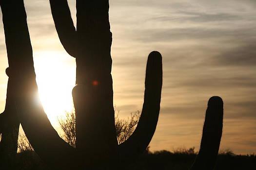 Sun Arms by David S Reynolds