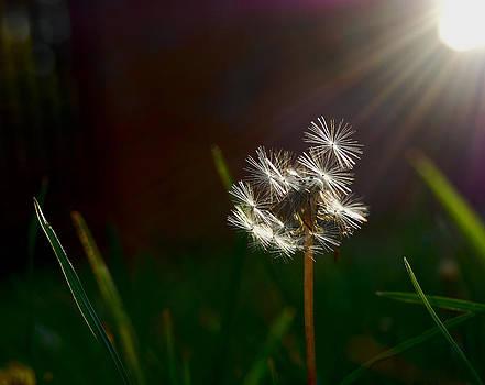 Sun Bathed by Srna Stankovic