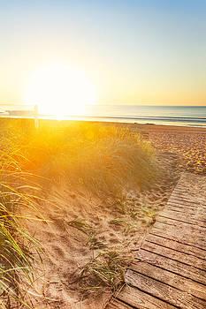 Jo Ann Snover - Sun bathes dunes