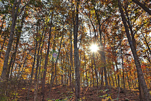 Simply  Photos - Sun beams dance in autumn trees