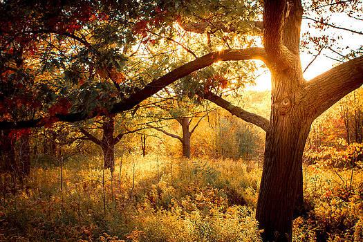 Sun Burst by Milan Kalkan