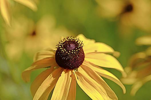 Jack R Perry - Sun Crown