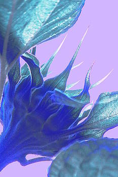 Sun Flower by Gillis Cone
