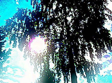 Sun glare by Pauli Hyvonen