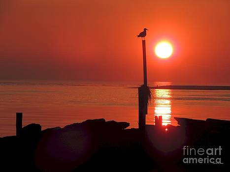 Sun Gull by Laurence Van Oliver