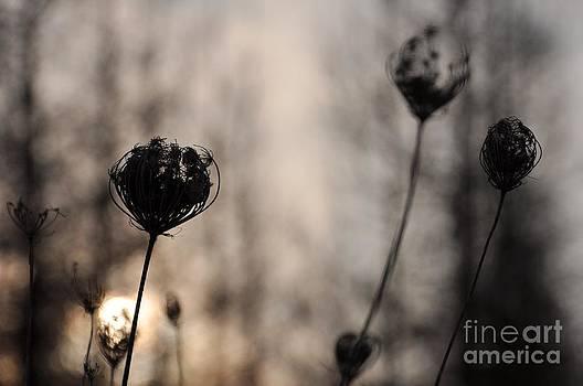 Sun In Darkness by Paula Sharlea