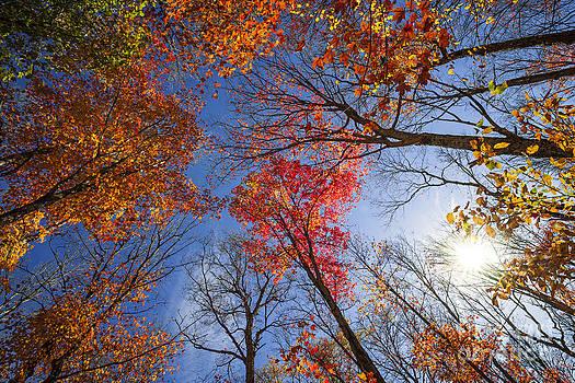 Elena Elisseeva - Sun in fall forest canopy
