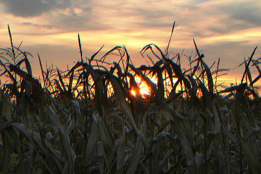 Sun in the fields by Li   van Saathoff