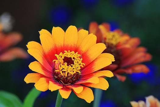 Sun Kissed Flower by Rebecca Adams