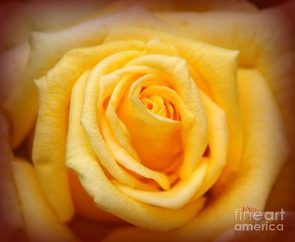 Patrick Witz - Sun Kissed Rose