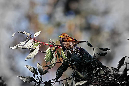 Sun Kissed Sparrow by Kathy J Snow