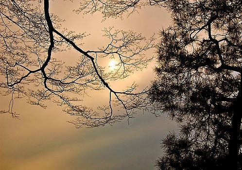 Sun Moon by Yen