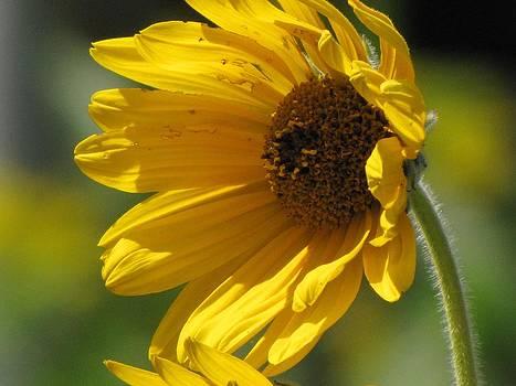 Sun of Life by Harry Wojahn