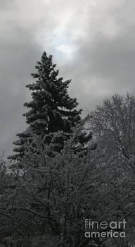 Gail Matthews - Sun peeks at Snowy Tree