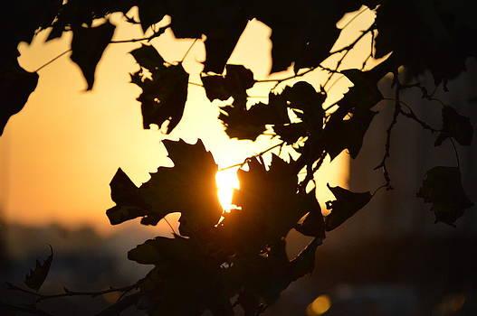 Sun rayon by Najlae SATTE