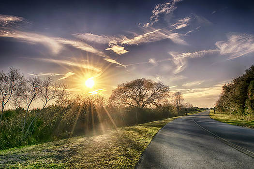 Sun Rays by Louise Hill