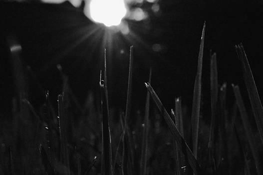 Sun Rays  by Tara Miller