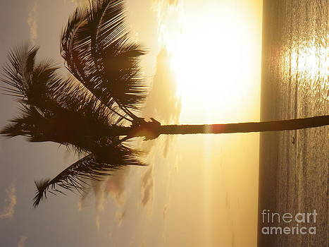 Sun Set Palm by Dean Gribble