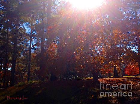 Sun shining through... by Jinx Farmer