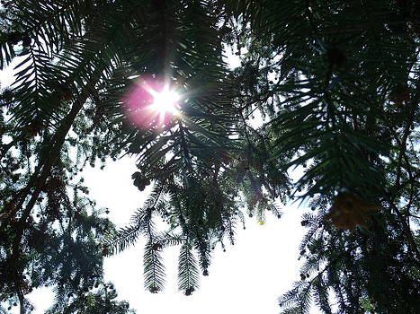 Sun through the Pine by Terrilee Walton-Smith
