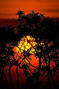 Sun through the trees by I Cale