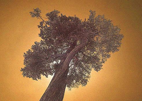 John Cardamone - Sun Tree