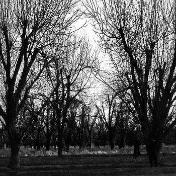 #sun #trees #blackandwhite by Leanne H