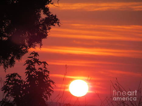 Sun Tsu Sunrise by Debbie Nester