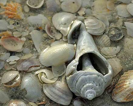 Sun Water and Shells by Maria Suhr