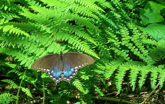 Sunbathing butterfly by Diane Mitchell