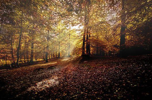 Henrik Petersen - Sunbeam in the forest