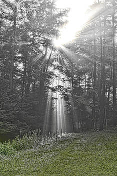 Sunbeam by Tom Heeter