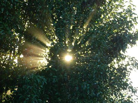 Sunbeams through the tree by Linda Brown