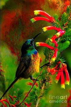 Sunbird by Daniela White