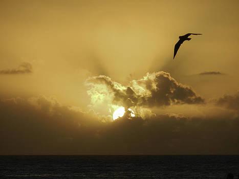 Sunbird by Peter Lombard