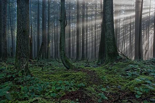 Sunburst in Rain Forest by Colin Sands