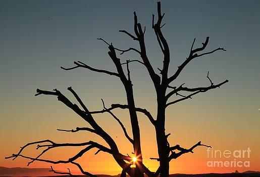 Adam Jewell - Sunburst Silhouette