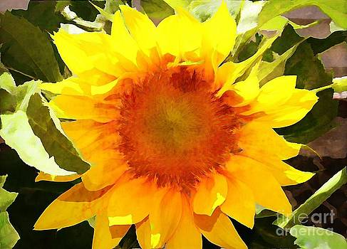 Sunburst Sunflower by Judy Palkimas