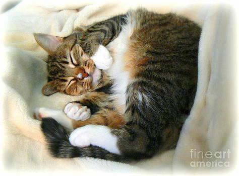Diana Besser - Sunday Afternoon Snooze