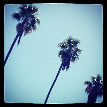 #sunday #palms #beauty #tri #threetrees by Barrett Wilson